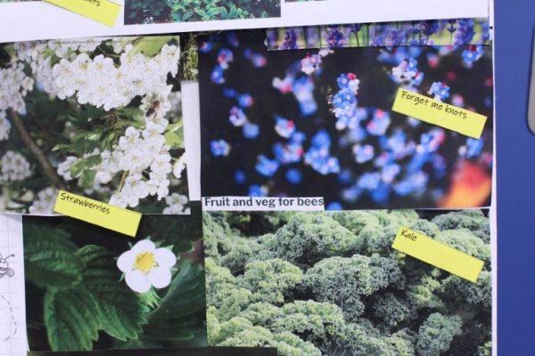 Design a garden (8)